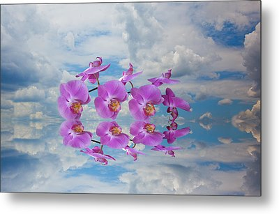 Orchid Sky Metal Print by Sarah McKoy