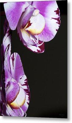 Orchid Stem Metal Print by Phyllis Denton