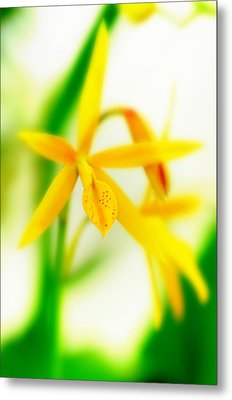 Orchid Vi Metal Print by Floyd Menezes