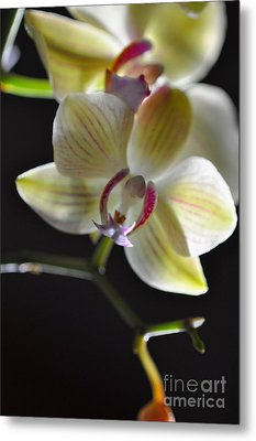 Metal Print featuring the photograph Orchidee by Sylvie Leandre