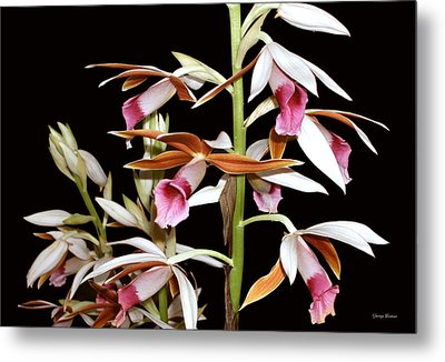Orchids 006 Metal Print by George Bostian