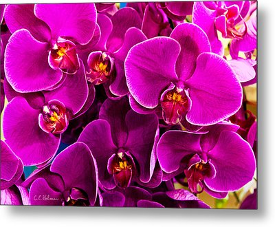 Orchids A Plenty Metal Print by Christopher Holmes