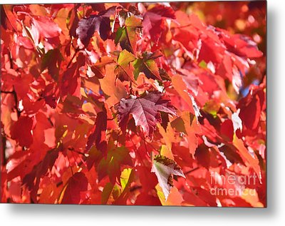 Metal Print featuring the photograph Oregon Red by Mindy Bench