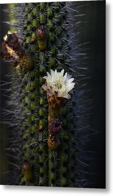 Organ Pipe Cactus  Metal Print by Saija  Lehtonen