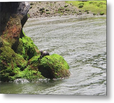 Metal Print featuring the photograph Otter In Bellingham Bay by Karen Molenaar Terrell