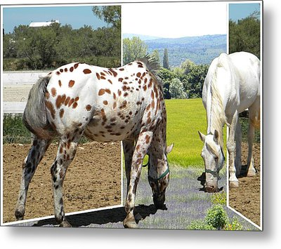 Out For A Provensale Taste Metal Print by Manuela Constantin