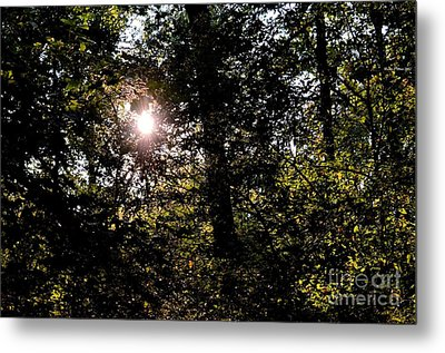 Out Of The Darkness He Calls Metal Print by Maria Urso