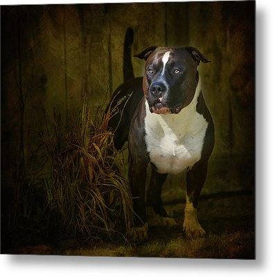 Out Of The Shadows Metal Print by Larry Marshall