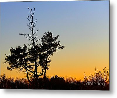 Metal Print featuring the photograph Out On A Limb by Davandra Cribbie
