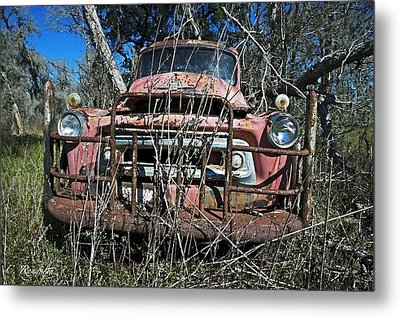 Metal Print featuring the photograph Out To Pasture by Cheri Randolph