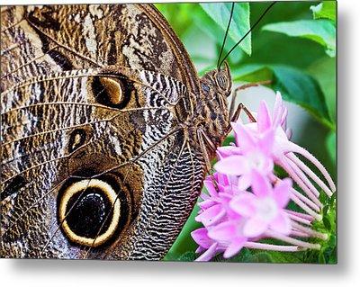 Owl Butterfly Metal Print by Daniel Osterkamp