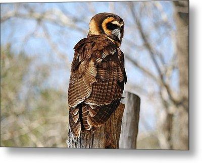 Owl In A Tree Metal Print by Paulette Thomas