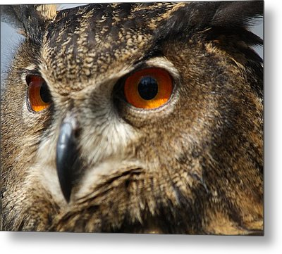 Owl Up Close Metal Print by Paulette Thomas