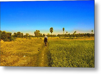 Paddy Field Metal Print by Arik S Mintorogo