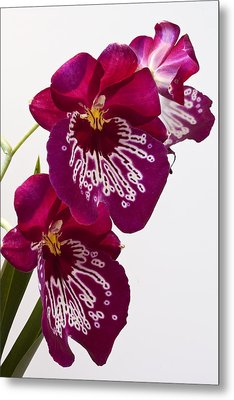 Metal Print featuring the photograph Painted Orchid by Shirley Mitchell
