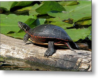 Painted Turtle On Log Metal Print