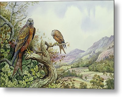 Pair Of Red Kites In An Oak Tree Metal Print by Carl Donner