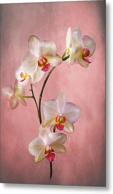 Pale Pink Orchid Spray Metal Print by Jacqi Elmslie