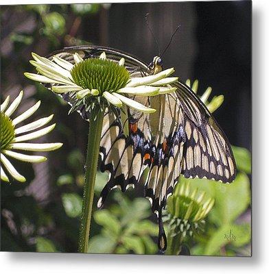 Pale Swallowtail Metal Print
