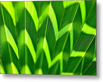 Palm Abstract Metal Print by Michael Cinnamond