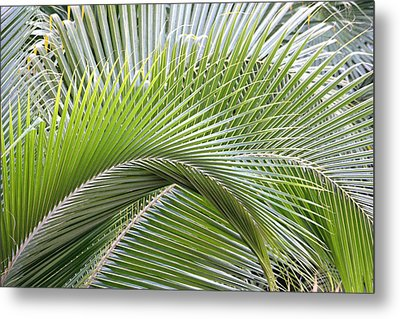 Palm Frawns Metal Print by Melanie Beasley