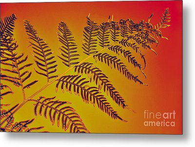 Palm Frond In The Summer Heat Metal Print by Kaye Menner
