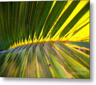 Palm Fronds Illuminated By The Sun Metal Print by Yali Shi