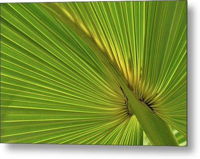 Metal Print featuring the photograph Palm Leaf II by JD Grimes