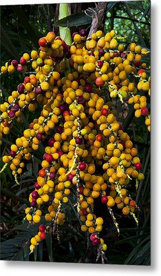 Metal Print featuring the photograph Palm Seeds Baroque by Steven Sparks