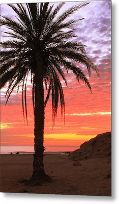 Palm Tree And Dawn Sky Metal Print by Roupen  Baker