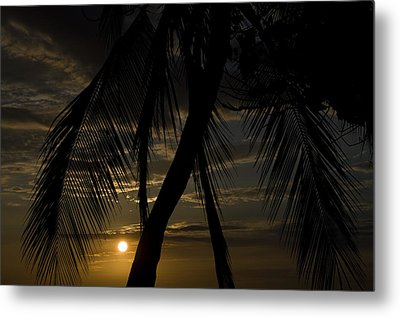 Palm Trees Silhouetted By The Setting Metal Print by Todd Gipstein