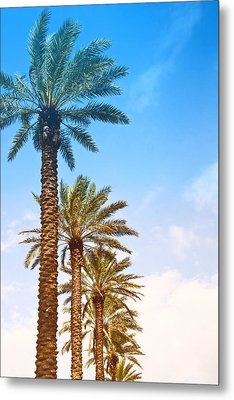 Palm Trees Metal Print by Susi Stroud