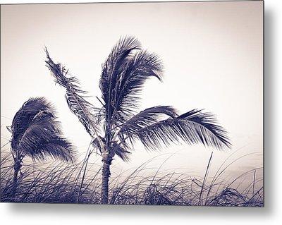 Palms 4 Metal Print