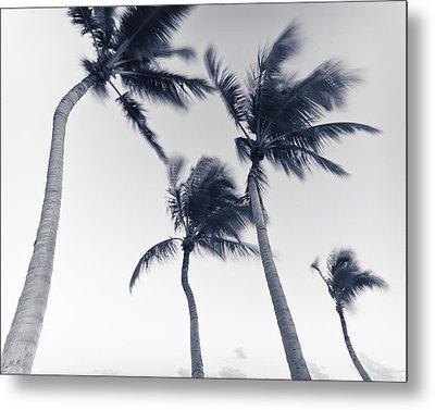 Palms 5 Metal Print