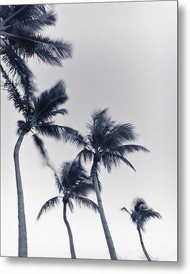 Palms 6 Metal Print