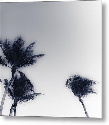 Palms 7 Metal Print
