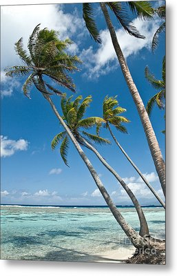 Palms In The Wind Metal Print by Jim Chamberlain