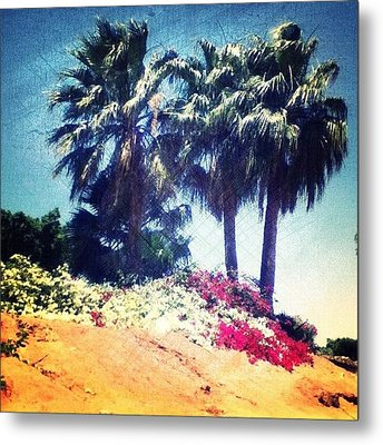 #palms #trees #beach #webstagram Metal Print by Andrea Bigiarini