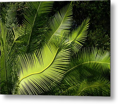 Metal Print featuring the photograph Palms Waving At The Sun by Jodi Terracina