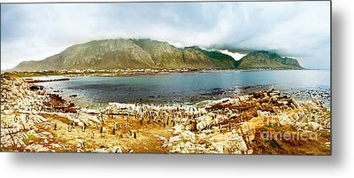 Panoramic Landscape With Penguins Metal Print by Anna Om