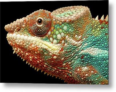 Panther Chameleon Metal Print by MarkBridger