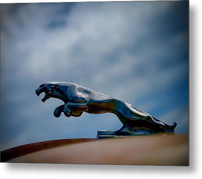 Panther Hoodie Metal Print by Douglas Pittman