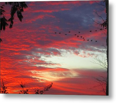 Papaya Colored Sunset With Geese Metal Print by Kym Backland