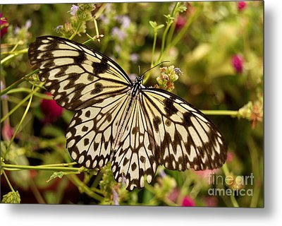 Metal Print featuring the photograph Paper Kite Butterfly by Eva Kaufman