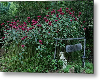 Pappy's Valley Metal Print by Katheryn Napier