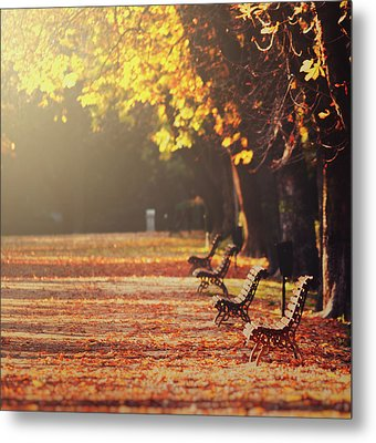 Park Benches In Fall Metal Print by Julia Davila-Lampe