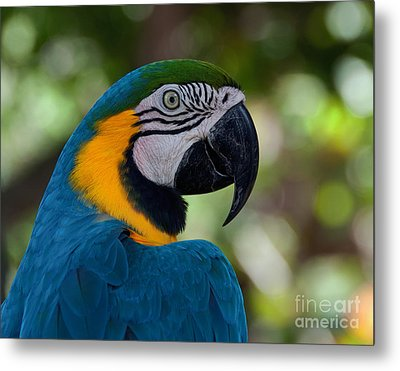 Parrot Head Metal Print by Art Whitton