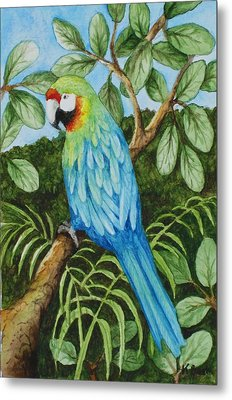 Parrot Metal Print by Katherine Young-Beck