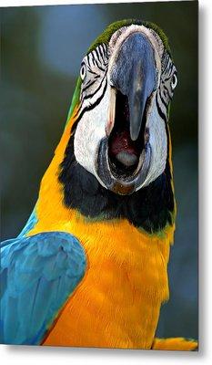 Parrot Squawking Metal Print by Carolyn Marshall
