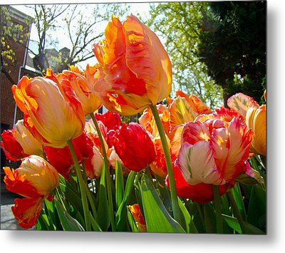 Parrot Tulips In Philadelphia Metal Print
